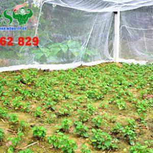 lưới trồng rau sạch