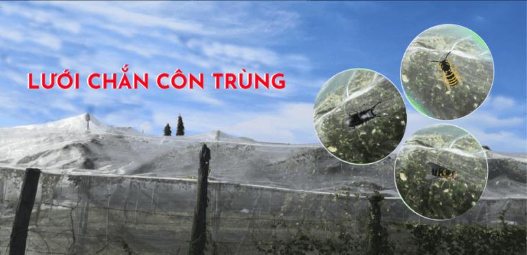 Lưới Chắn Côn Trùng Công Nghệ Cao – Thay Thế Cả Hàng Ngoại Nhập